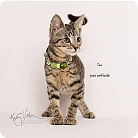 Adopt A Pet :: TOM - Westlake, CA
