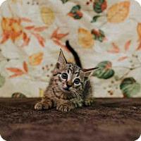 Adopt A Pet :: *CHAMBERLIN - Sugar Land, TX