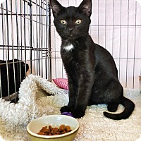 Adopt A Pet :: Pan - Philadelphia, PA