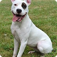 Adopt A Pet :: Sophie - Michigan City, IN