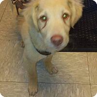 Adopt A Pet :: SIMBA - Coeburn, VA