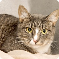 Adopt A Pet :: Kelly - Long Beach, NY