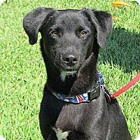 Adopt A Pet :: Bailey - Kingwood, TX