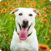 Adopt A Pet :: Charlotte - Austin, TX