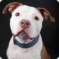 Adopt A Pet :: Kane - Kansas City, MO