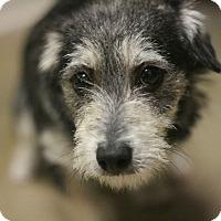Adopt A Pet :: Palughin - Canoga Park, CA