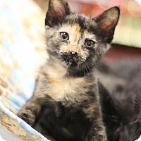 Adopt A Pet :: Miss Elizabeth - Sacramento, CA