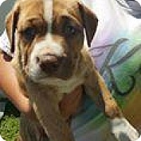 Adopt A Pet :: Gemma - Marlton, NJ