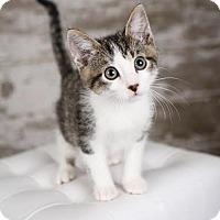 Adopt A Pet :: Jack - Eagan, MN
