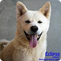 Adopt A Pet :: Eclipse - Santa Maria, CA