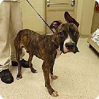 Adopt A Pet :: Razzle-Dazzle - Baden, PA