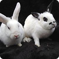 Adopt A Pet :: Sage & Sienna - Watauga, TX