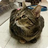 Adopt A Pet :: Honey-Bun - Elmwood Park, NJ