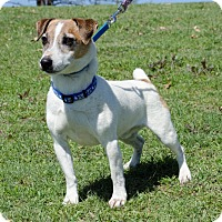 Adopt A Pet :: Elliott from Dallas - Dallas/Ft. Worth, TX