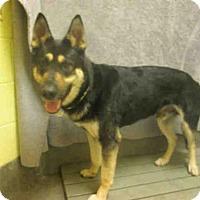 Adopt A Pet :: *PRINCE - Upper Marlboro, MD