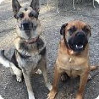 Adopt A Pet :: BONNIE & BANDIT -  FOUND SOUL MATES IN RESCUE - Bainbridge Island, WA