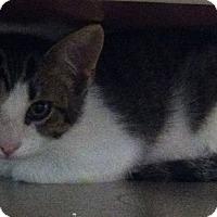 Adopt A Pet :: Andy - Huntsville, AL