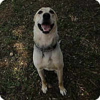 Adopt A Pet :: Rex - Cedar Creek, TX