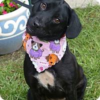 Adopt A Pet :: Winnie - Fayetteville, NC