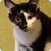 Adopt A Pet :: Rachelle - Montreal, QC