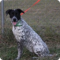 Australian Cattle Dog Mix Dog for adoption in New Smyrna beach, Florida - Sweetie