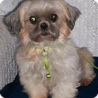 Adopt A Pet :: Ruthie - Sullivan, MO