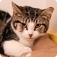 Adopt A Pet :: Zelda - Brimfield, MA