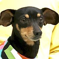 Adopt A Pet :: Pupper - Evansville, IN