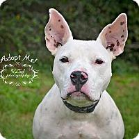 Bulldog Mix Dog for adoption in Fort Valley, Georgia - Graham