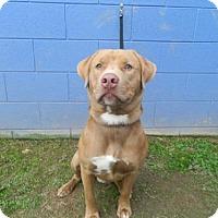 Adopt A Pet :: Tanner - Randleman, NC