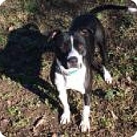 Adopt A Pet :: Honey - Gridley, CA