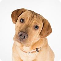 Adopt A Pet :: Ed - St. Louis Park, MN