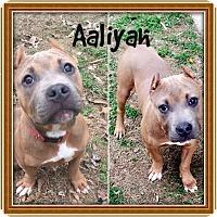 Adopt A Pet :: AALIYAH - Moosup, CT