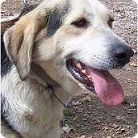 Adopt A Pet :: Hansom - Oakland, AR