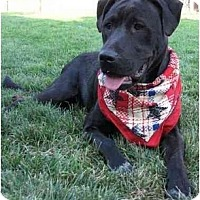 Adopt A Pet :: Brady - Longmont, CO