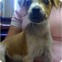 Adopt A Pet :: Teddy - Fowler, CA