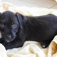 Adopt A Pet :: Marti - Midway, KY