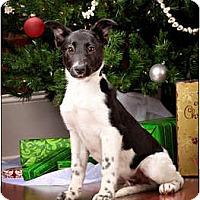 Adopt A Pet :: Dunn - Owensboro, KY
