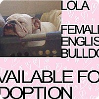 Adopt A Pet :: LOLA - Hollywood, FL