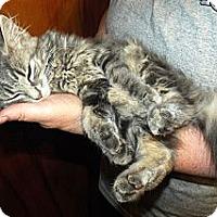 Adopt A Pet :: Abbie - Xenia, OH