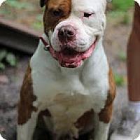 Adopt A Pet :: Precious - Tinton Falls, NJ