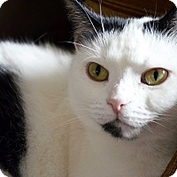 Adopt A Pet :: Oreo - Xenia, OH