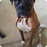 Adopt A Pet :: Daniel C. Dogg - Dayton, OH