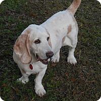 Adopt A Pet :: Logan - Fort Lauderdale, FL