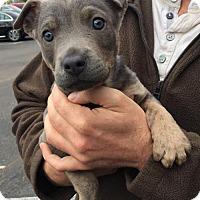 Adopt A Pet :: Emmitt - San Diego, CA