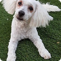 Adopt A Pet :: CASEY - Winnetka, CA