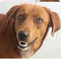Adopt A Pet :: Madison - Springdale, AR