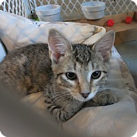 Adopt A Pet :: Ripley - Geneseo, IL