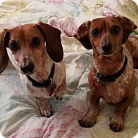 Adopt A Pet :: VICTORIA and VIDA - Portland, OR