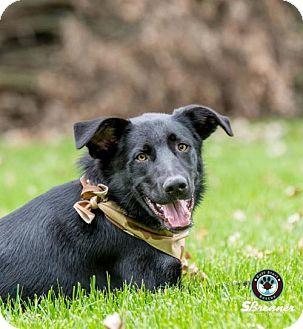 Labrador Retriever Mix Dog for adoption in Princeton, Minnesota - Razcal